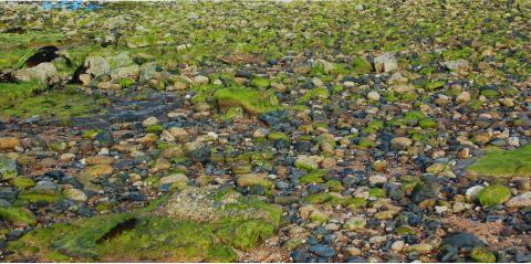 Sassi di mare